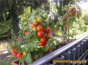 Почва для выращивания овощей на балконе