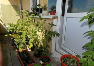 Уход за овощами на балконе
