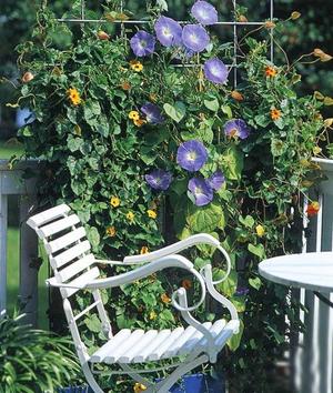 Как создать сад из цветов на балконе