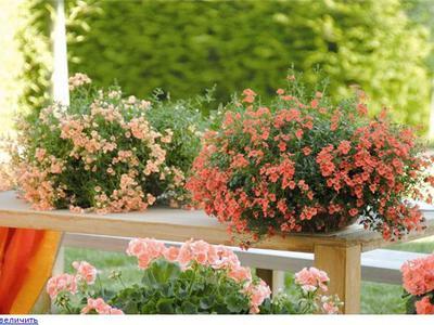 Ампельные цветы для сада - TheFlowers