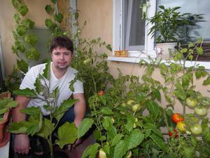 Уход за огородом на балконе