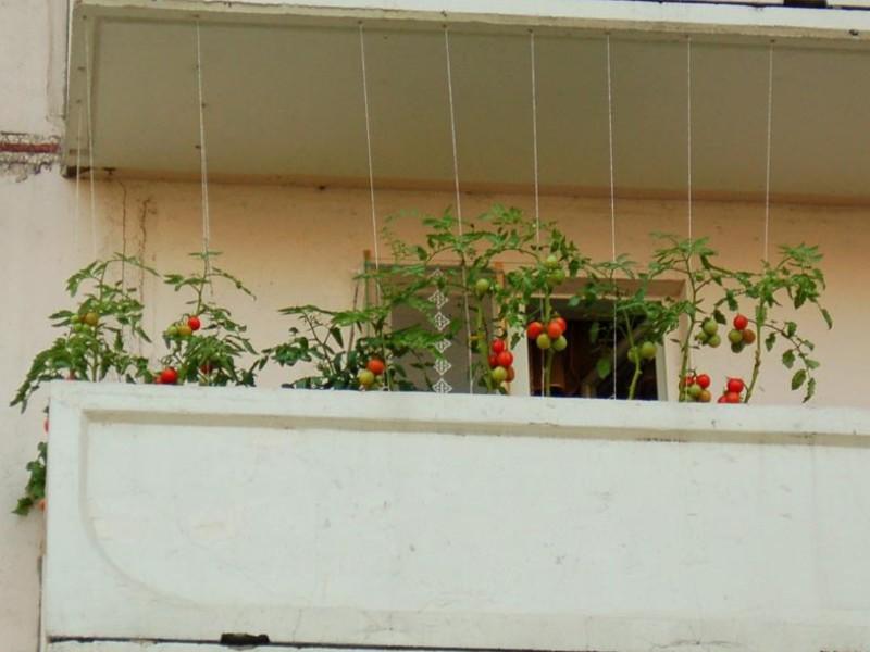 Как разбить огород на балконе