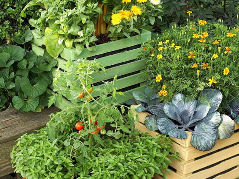 Овощной огород на балконе