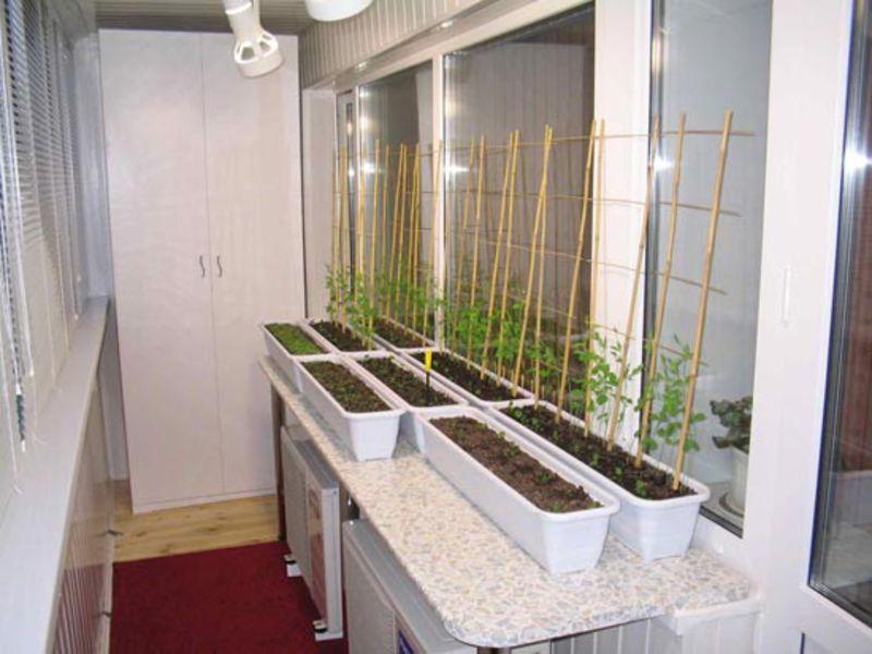 Как ухаживать за овощами на окне
