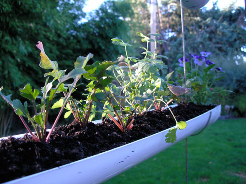 Способ выращивания огорода на окне