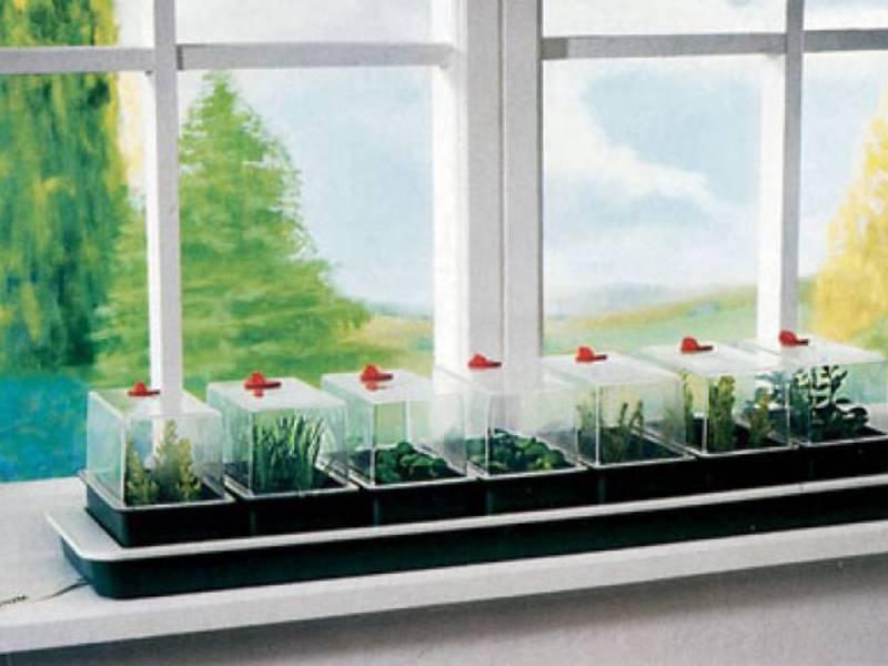 Как вырастить самим овощи на окне