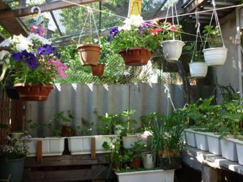 Мини огород на балконе