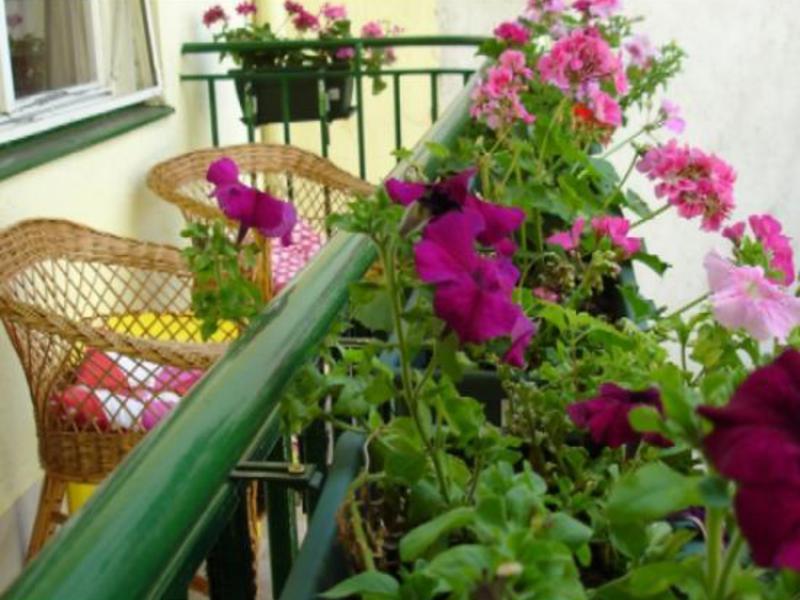 Цветы на солнечной стороне в саду