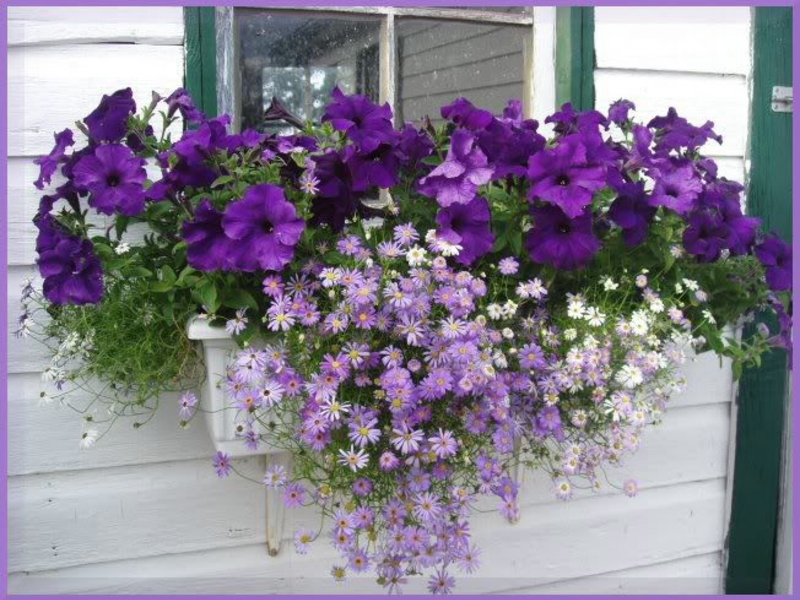 квіти в горшках фото
