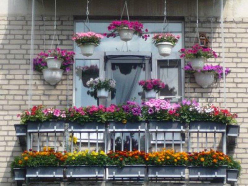 Как вырастить цветы на балконе / флористика / увлечения и хо.