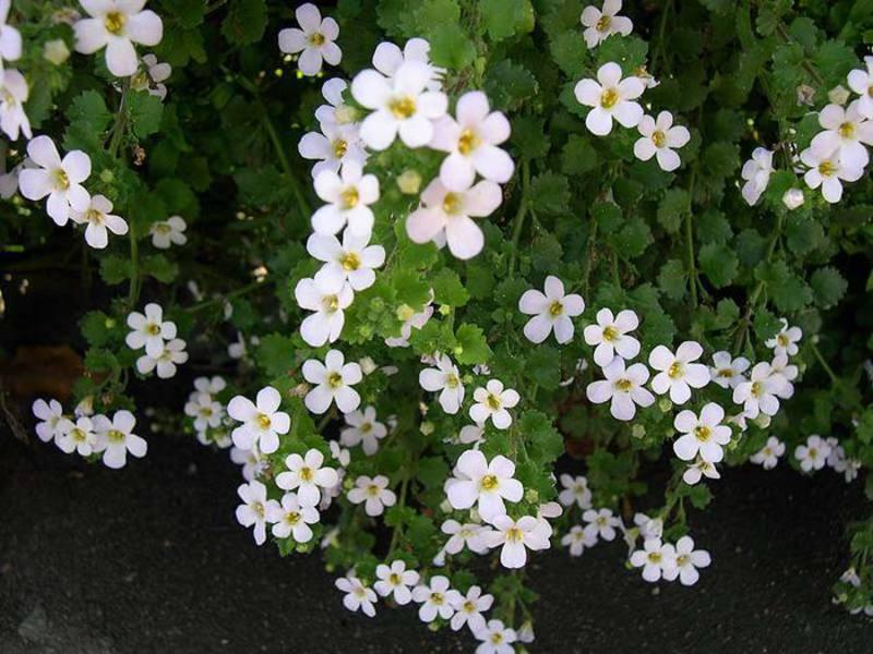 Велосипед кашпо с цветами 6