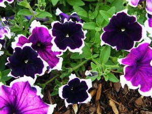 Самые популярные цветы для выращивания на балконе