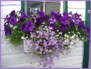 Как обустроить балкон для цветника?