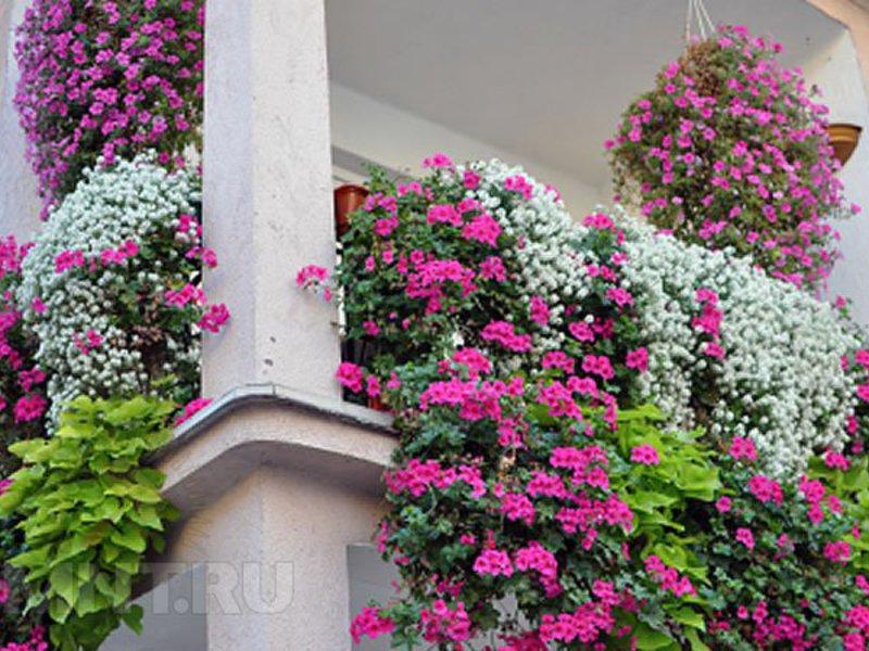 Цветы на подоконнике с улицы фото и названия