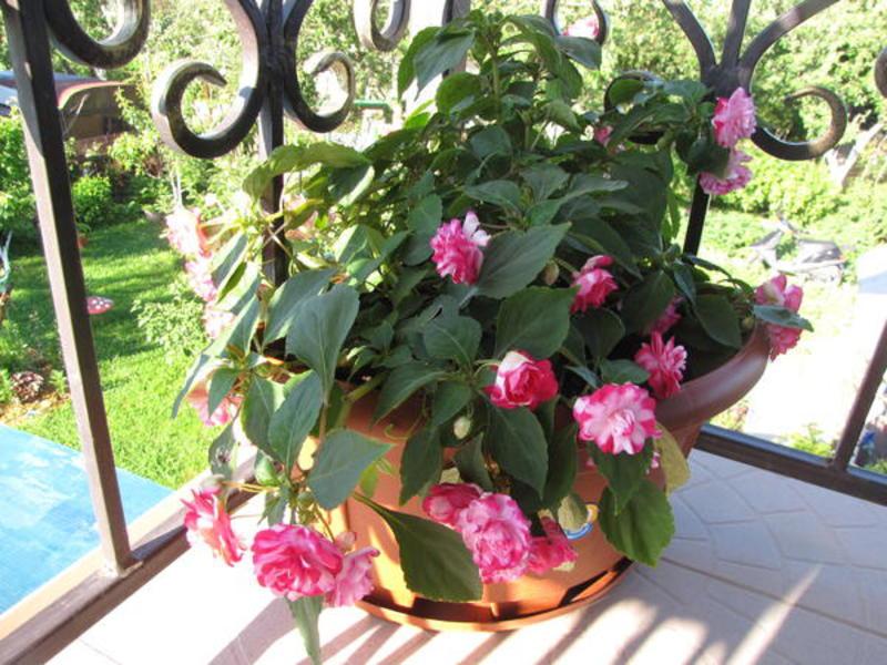 Как украсить балкон цветами.цветы для балкона..