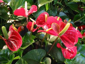 домашние цветы в горшках фото и названия уход
