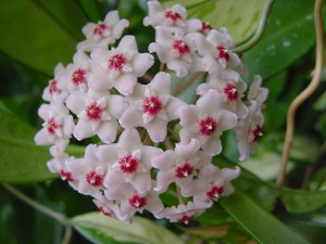 Фото домашних цветов цветущих белыми цветами 118