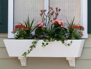 Купить балконные цветы