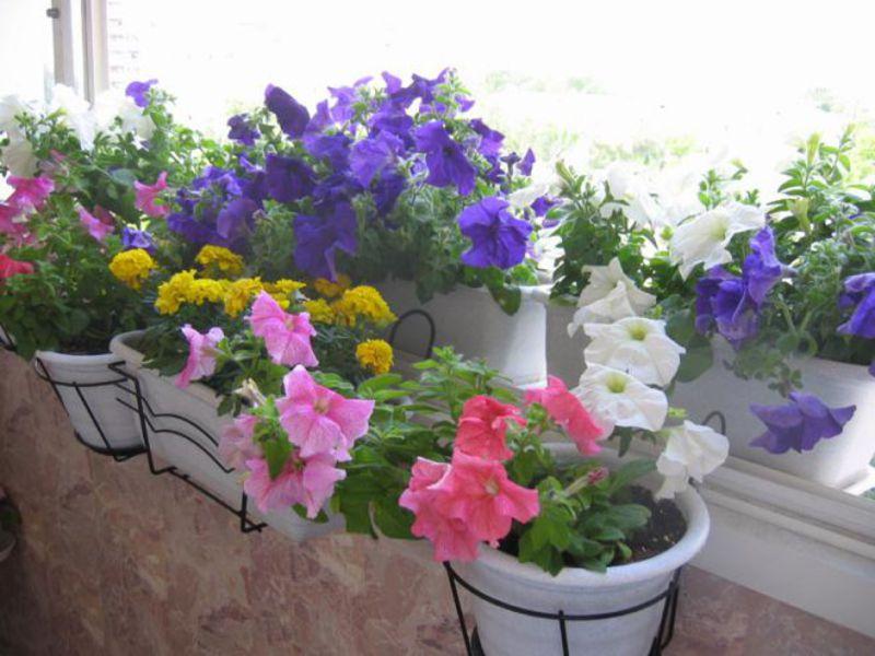Цветы в горшках: интересные композиции на фото - Hand