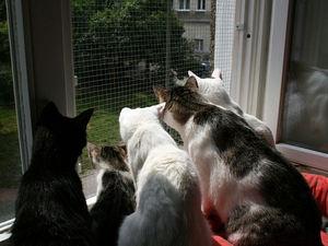 Сетка на окна от кошек
