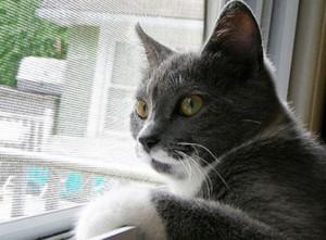 Сетка от кошек