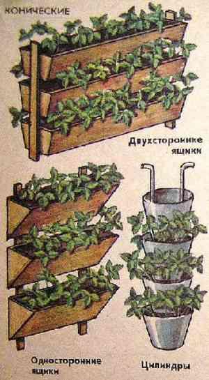 Как выращивать клубнику на балконе
