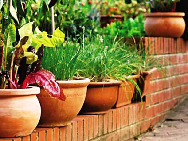 Горшки для огорода