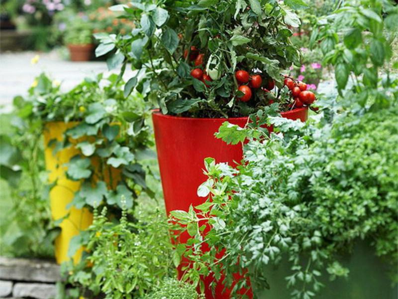 Основные правила выращивания зелени дома на балконе и подоко.