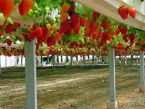 Какая почва нужна для выращивания клубники